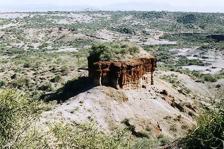 8300平方キロにも及ぶ広大な区域で、環境は砂漠から森林、 湿地帯に山岳と様々な顔を見せます。 この地域はマサイ族の居住地で、かつ化石人類遺跡が四箇所存在し