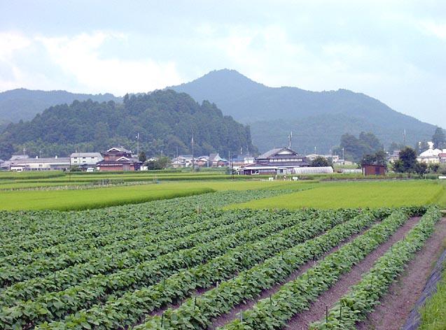 篠山市の自然