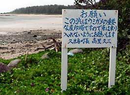 奥武島・海がめ館・畳石