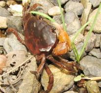 衛生動物(03b)節足動物門 甲殻綱