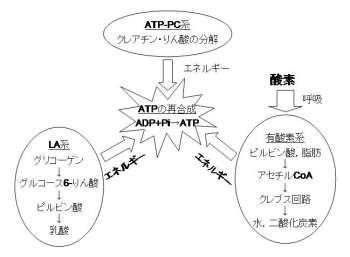 アデノシン三リン酸